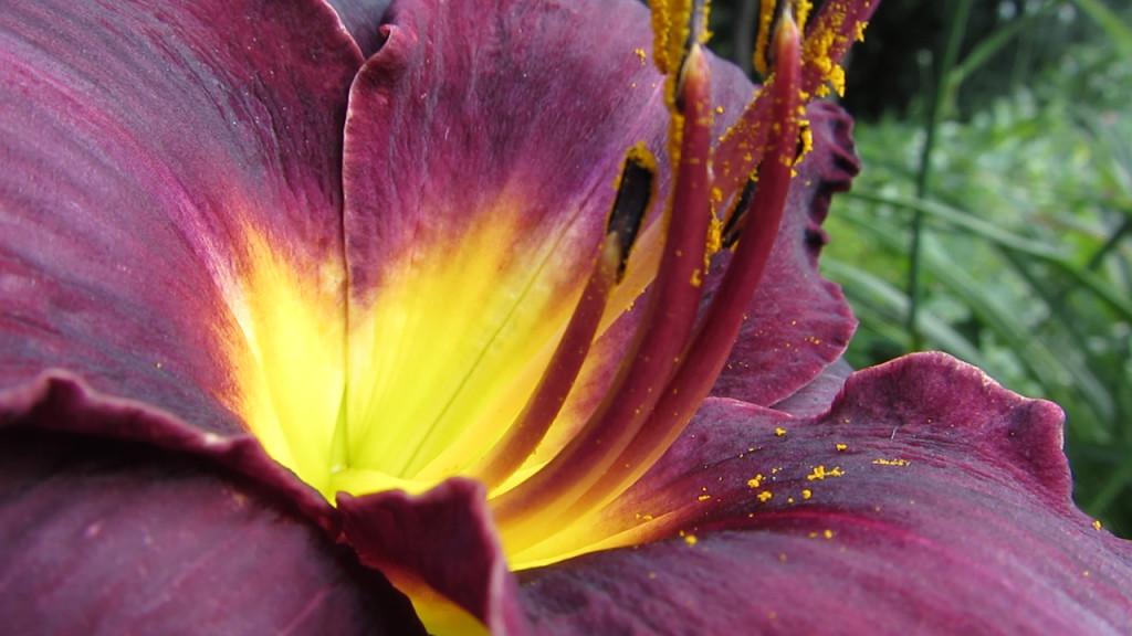 Purple_flower_b