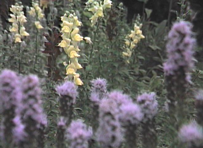 SD_Yellow_flower_b