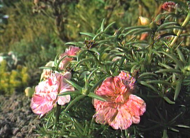 SD_florals_b